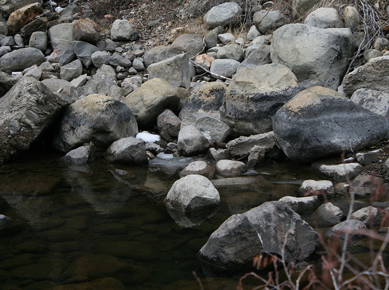 Can you see the mink? Truckee River near River Ranch, CA.