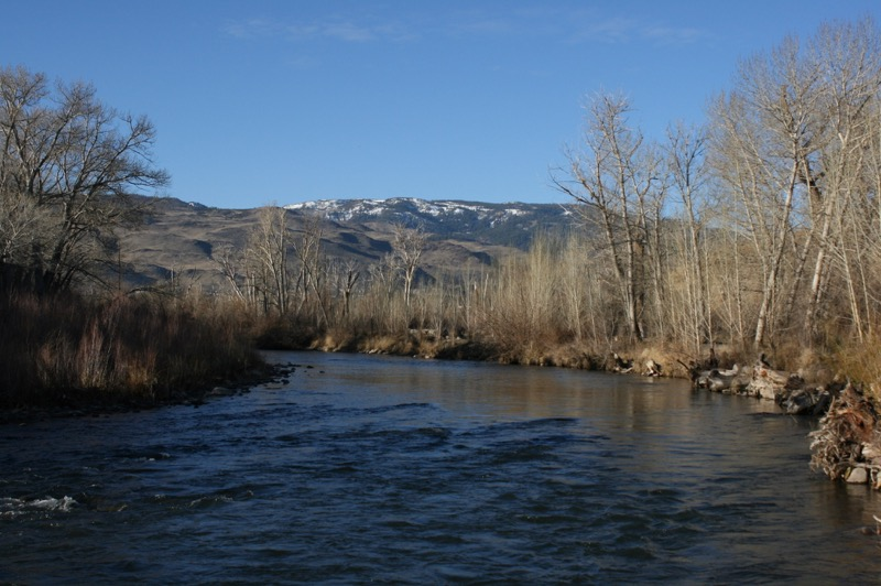 A beautiful February morning on the Truckee, in Oxbow Nature Study Area.