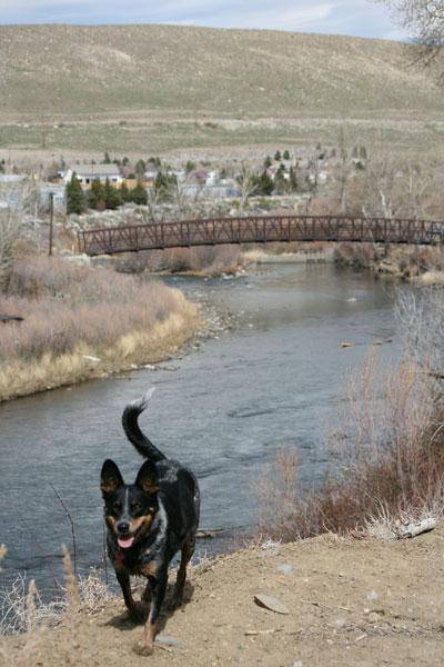 Chloe on the trail, Mar 15, 2015.