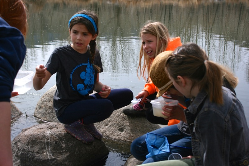 Inspecting the catch: Exploring the Truckee River with students from the Sierra Expeditionary Learning School.  McCarran Ranch, Mar 10, 2015.