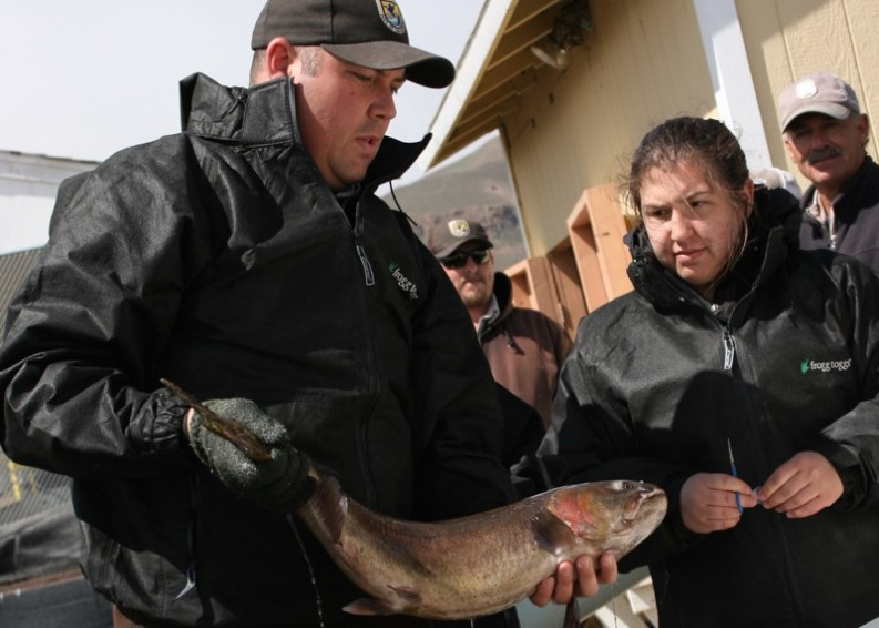 David Miller, USFWS biologist, holding a Lahontan cutthroat trout. April 13, 2015.