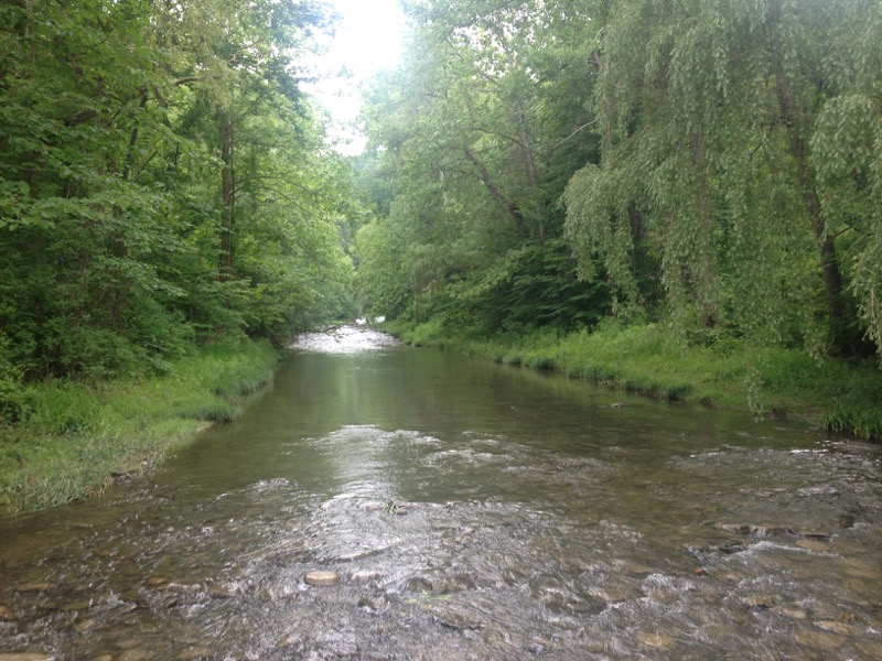Lots of water, lots of green. Enfield Creek, Ithaca, NY.