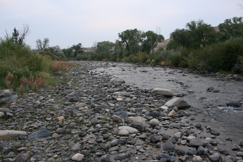 The Truckee River, flowing approx 25-50 cfs in Dorostkar Park. Sept 12, 2015.