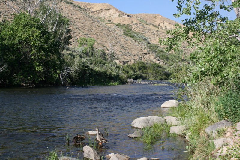 Truckee River, Mayberry Park. July 2016.